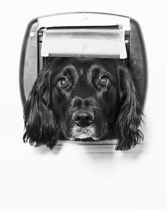dog photographer, birmingham, solihull, west midlands, pet photographer, canine, photo studio
